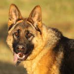 Hund Lea Portrait TB