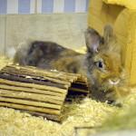 Klt Kaninchen 03-16 Jasmin
