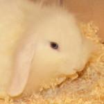 klt-kaninchen-45-16-kruemel_kopf