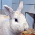 Klt Kaninchen 01-16 Eumel1