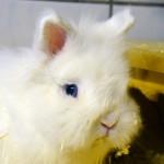 Klt Kaninchen 09-15 Flauschi2