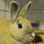 Klt Kaninchen 37-16 Judy Hopps