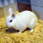 Klt Kaninchen 39-15 Tom1