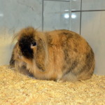 Klt Kaninchen 46-15 Jacky