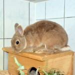 Klt Kaninchen 58-15 Freddy