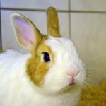 Klt Kaninchen 73-15 Daniel