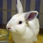 Klt Kaninchen 79-15 Ripitschip1