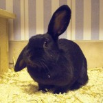 Klt Kaninchen Berta