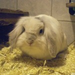 Klt Kaninchen Edgar