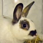 Klt Kaninchen 36-16 Fine