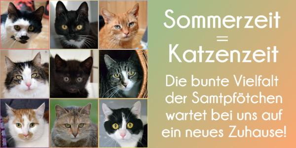 Beitrag Sommerzeit Katzenzeit HP