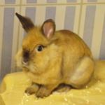 Klt Kaninchen 02-16 Jana