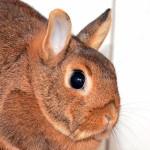 Klt Kaninchen 14-16 Ninchen
