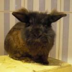 Klt Kaninchen Oskar