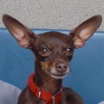 Hund Maggi Portrait 150