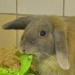 Klt Kaninchen 38-16 Nick1