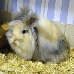 Klt Kaninchen Molly