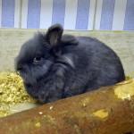 Klt Kaninchen Trolly