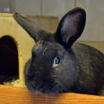 Klt Kaninchen 28-16 Billy1