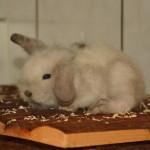 Klt Kaninchen 46-16 Flauschi